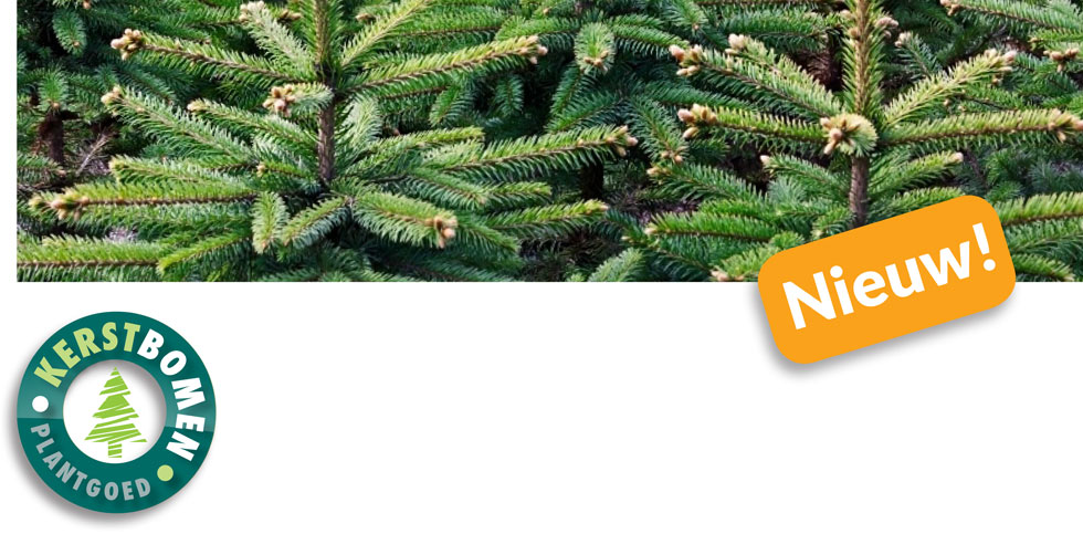 Kerstbomen Plantgoed Online Kopen